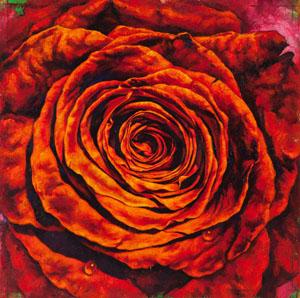 1.28 Garboushian JimMorphesis rose