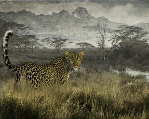 4.7 G2 elusive leopard
