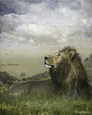 LionInTheMara2 CherylMedow-1