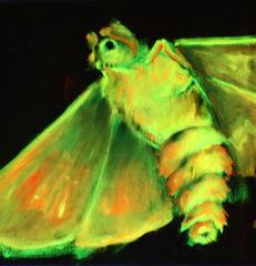 6.17 CB1 Lily SimonsonBlack Light Moth1