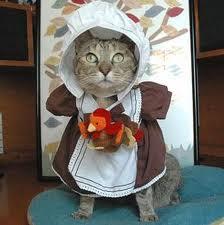 Cat-Thanksgiving
