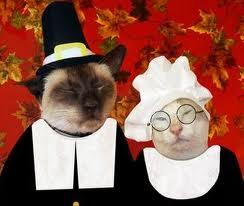 Cat Pilgrims