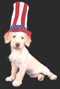 patriot-dog