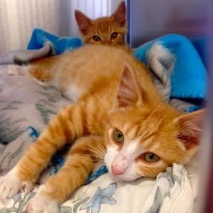 APlacetoBark kitty bernie8