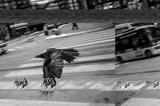 Sat-July26-Subliminal-bird-1-1024x680