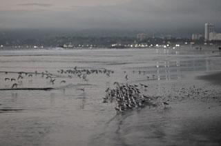 Thurs-July16-2015-Leica-HelenGarber-Night-Birds