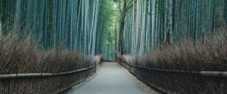 G2-FilmFEST-trees