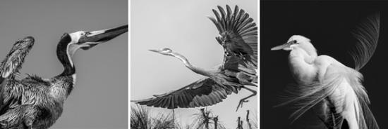 March25-2017-G2Gallery-LefttoRight-Pelecanus-MalibuCA-HighandMighty-LongBeachCA-FeatheredFriend-Malibu-CA