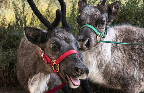Dec2-2017-ReindeerRomp