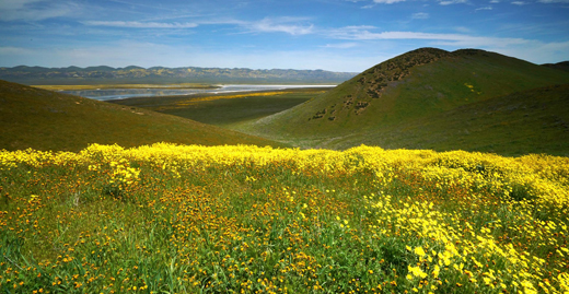 April2019-ETG-Wildflowers-Photo-by-Richard-Bilow-2018-copyright-Carizzo-.Plain-National-Park-Superbloom